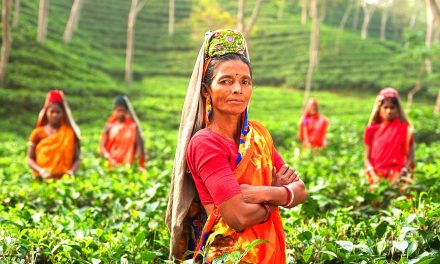Learn 5 reasons why Assam is the richest state in tea cultivation